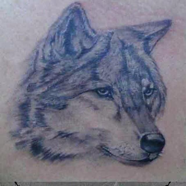 #tattoo #tattoobymete #tattobyejder #animaltattoo #avcılar #avcılartattoo #angel…